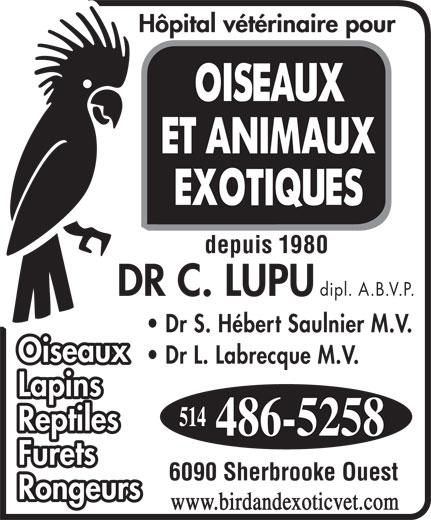 Veterinarian Hospital for Birds & Exotics (514-486-5258) - Display Ad - Reptiles Furets 6090 Sherbrooke Ouest Rongeurs www.birdandexoticvet.com depuis 1980 dipl. A.B.V.P. Dr S. Hébert Saulnier M.V. Dr L. Labrecque M.V. Lapins Oiseaux