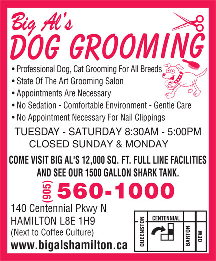 Big Al's (905-560-1000) - Display Ad - Professional Dog, Cat Grooming For All Breeds State Of The Art Grooming Salon Appointments Are Necessary No Sedation - Comfortable Environment - Gentle Care No Appointment Necessary For Nail Clippings TUESDAY - SATURDAY 8:30AM - 5:00PM CLOSED SUNDAY & MONDAY COME VISIT BIG AL'S 12,000 SQ. FT. FULL LINE FACILITIES AND SEE OUR 1500 GALLON SHARK TANK. 560-1000 (905) 140 Centennial Pkwy N HAMILTON L8E 1H9 (Next to Coffee Culture) www.bigalshamilton.ca