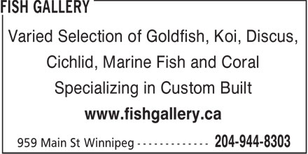 Fish Gallery (204-944-8303) - Annonce illustrée======= - Varied Selection of Goldfish, Koi, Discus, Cichlid, Marine Fish and Coral Specializing in Custom Built www.fishgallery.ca