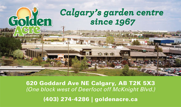 Golden Acre Garden Centre (403-274-4286) - Display Ad - 620 Goddard Ave NE Calgary, AB T2K 5X3 (One block west of Deerfoot off McKnight Blvd.) (403) 274-4286 goldenacre.ca 620 Goddard Ave NE Calgary, AB T2K 5X3 (One block west of Deerfoot off McKnight Blvd.) (403) 274-4286 goldenacre.ca