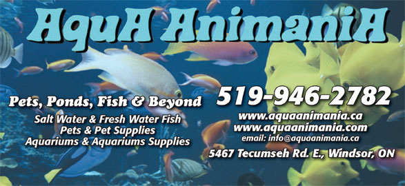 AquA AnimaniA (519-946-2782) - Display Ad - 519-946-2782 www.aquaanimania.ca Salt ater FishSalt r Fish www.aquaanimania.com Pets & Pet Supplies Aquariums & Aquariums Supplies 546 ecumse ndsor, ON