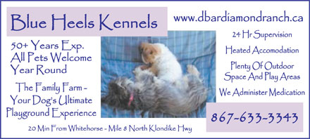 Blue Heels Kennels (867-633-3343) - Annonce illustr&eacute;e